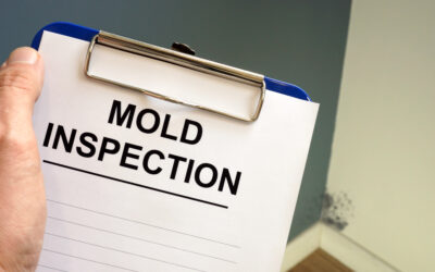 Everything to Consider When Hiring a Mold Inspection Company