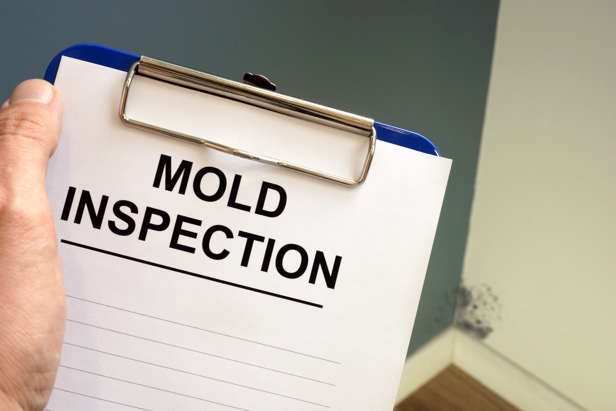 mold inspection company