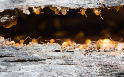 Termite Control: 7 Signs Your House May Have Termites (And What To Do About It!)