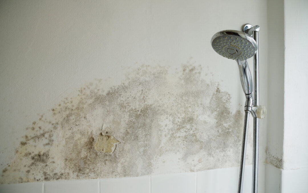 Staying Safe at Home: 5 Important Reasons Why You Should Test for Black Mold